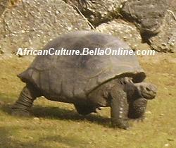 Aldabra Giant Tortoise Life Span | RM.